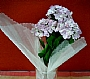 HM HYDRANGEA FLOWER BUSH BUD 4